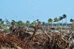 La devastación al Malecón Tajamar también afectó la fauna que habitaba el lugar / Foto: Cuatoscuro - La Jornada